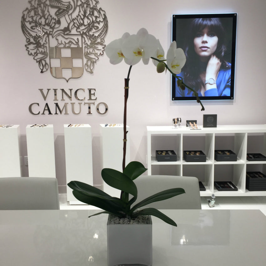 Best Orchid Plants for Offices in NYC by Anissa Rae Flowers