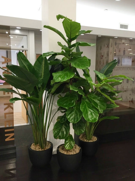 Tall Green Low Maintenance Office Plants