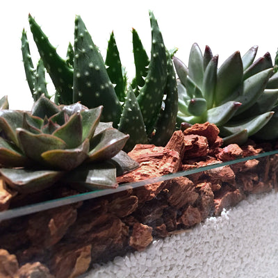 Cool and Unique succulent displays for NYC delivery