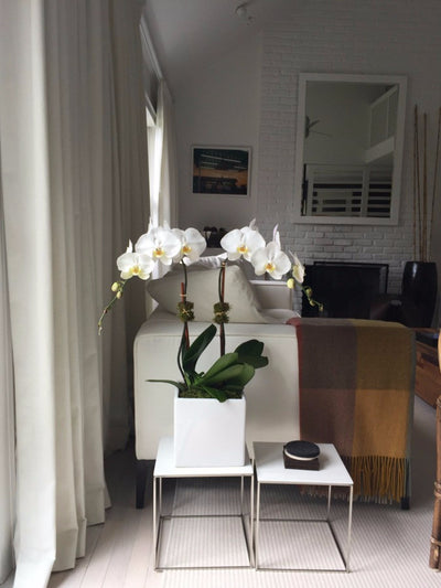 Double Stem Orchid Plant in Ceramic Square Container Best NYC Florist Anissa Rae Flowers
