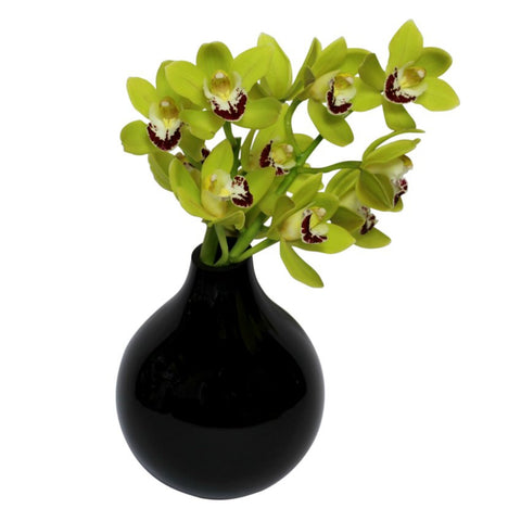 Mini Green Cymbidium Orchid Arrangement for reception desk
