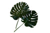 Monstera Leaf Bunches to buy nyc florist
