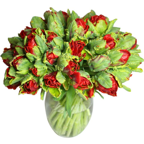 Red Double Parrot Tulips in Bunches for New York City Delivery
