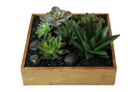 Succulent garden designed in a square light wood planter.