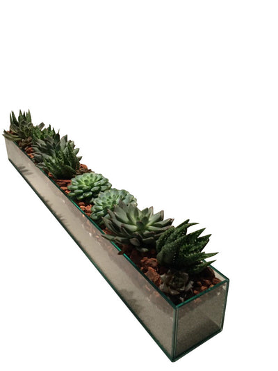 Giant Succulent Gardens for long tables in NYC