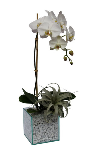 White orchid plant in a modern square clear glass with white stones.