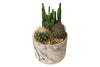 Mini Cactus Garden Plants for NYC Delivery