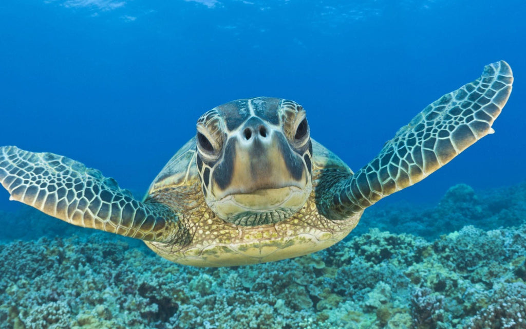 World Turtle Day is May 23rd