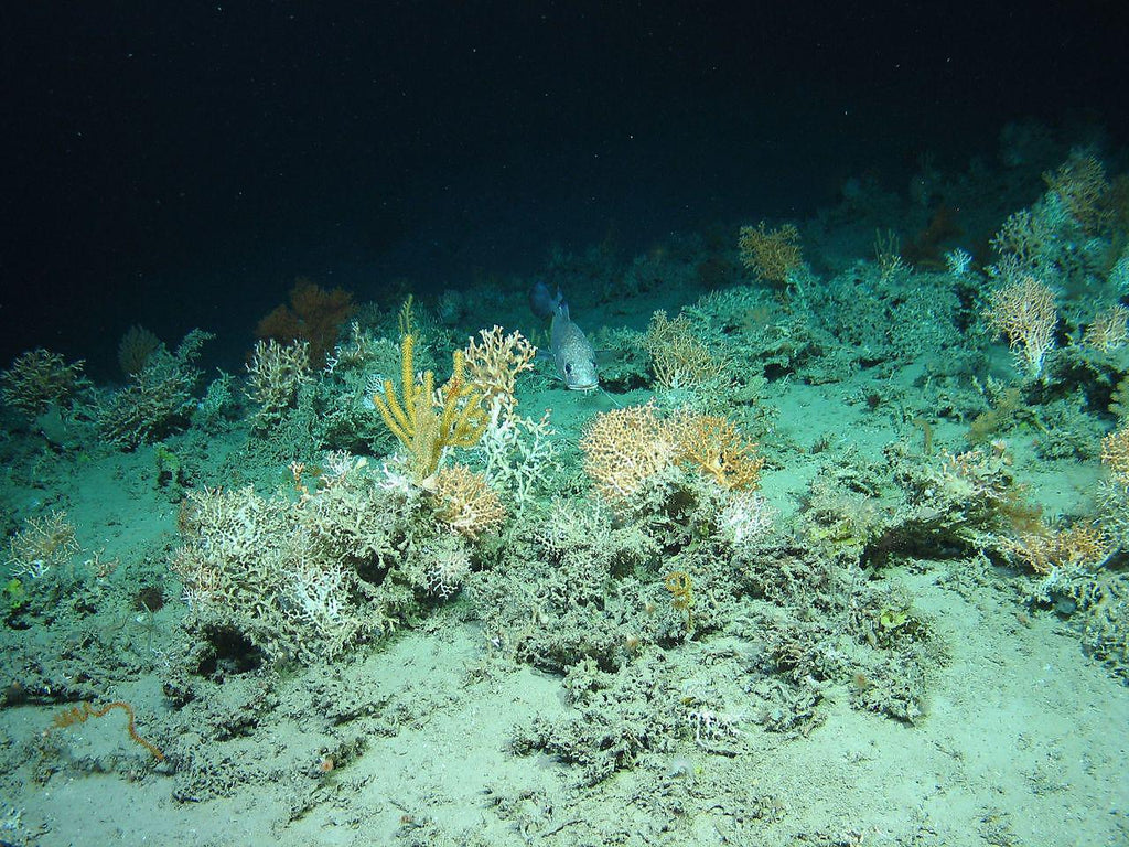 "The experimental killing of deep water ""super coral reefs"" could lead to their survival"
