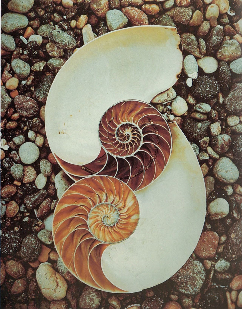 sacred geometry in a seashell setting on top of rocks