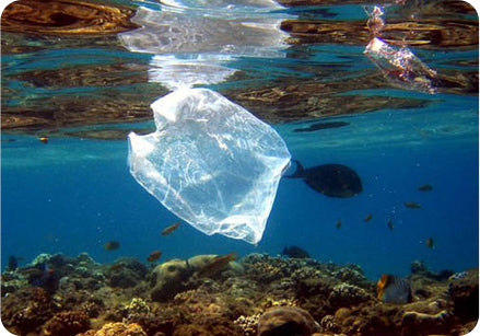 Keep single-use plastic out of our oceans! Say no to single-use plastic!