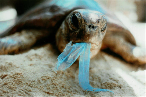 "Keep plastic out of our oceans and waterways by saying ""no"" to single-use plastic"