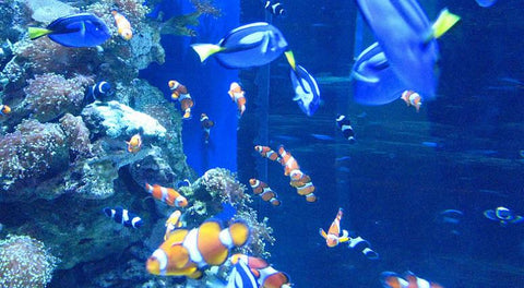 An aquarium membership makes an awesome gift for an ocean lover
