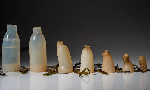 biodegradable water bottle made out of algae