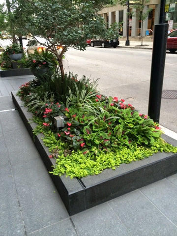 Beautiful flower beds on Chicago city streets