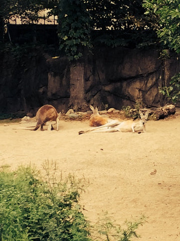 Check out this kangaroo giving us her casually elegant model pose-- not a care in the world!