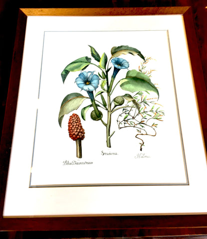 Large Botanical Print