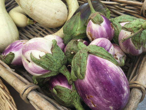 Rosa Bianca eggplants from Shear Rock Farms