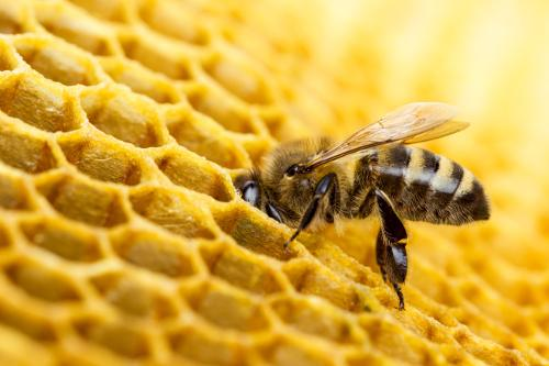 Health Benefits of Propolis - What is Propolis And Why Should We Be Taking It?