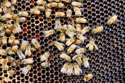 Simple Ways To Improve Your Health With Bee Propolis