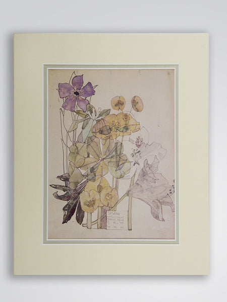 Mackintosh 'Spurge' Flower Print