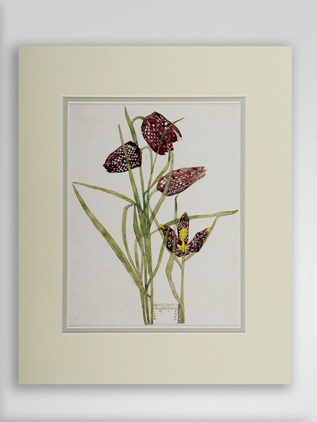 Mackintosh 'Fritallaria' Flower Print