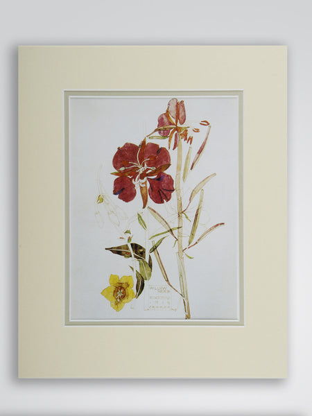 Mackintosh 'Willow Herb' Flower Print