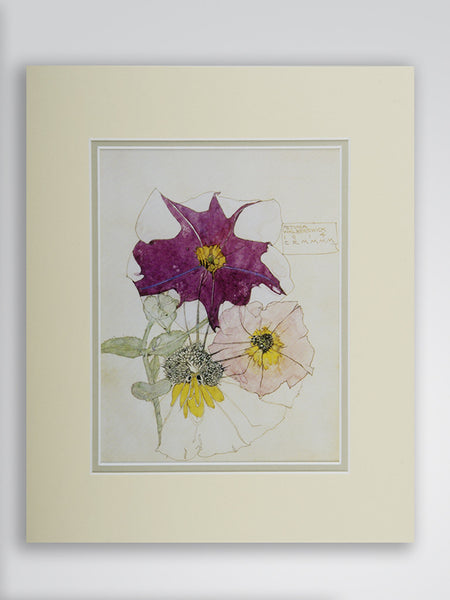 Mackintosh 'Petunia' Flower Print