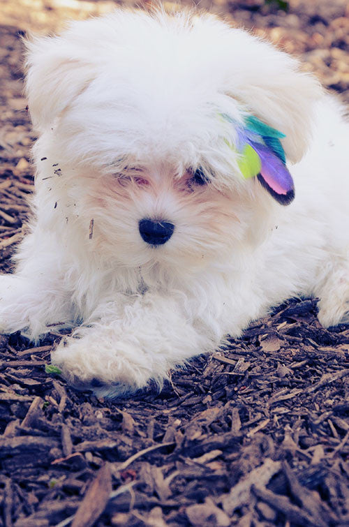 feather extensions for dogs