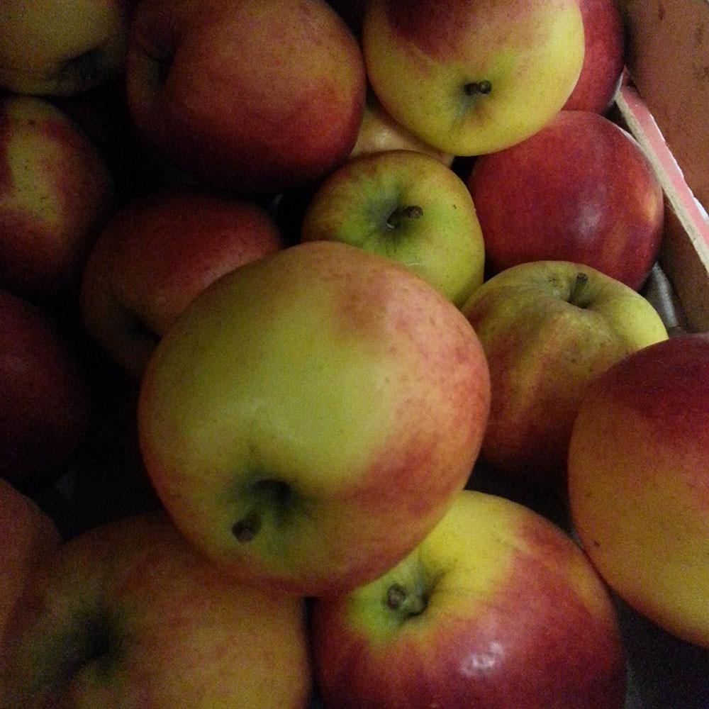 Apples - Red Pippin - Vegetropolis Organic Fruit and Veg Delivery Service
