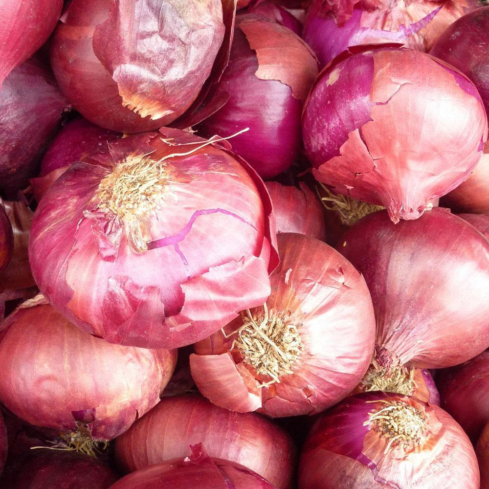 Onion, Red - Vegetropolis Organic Fruit and Veg Delivery Service