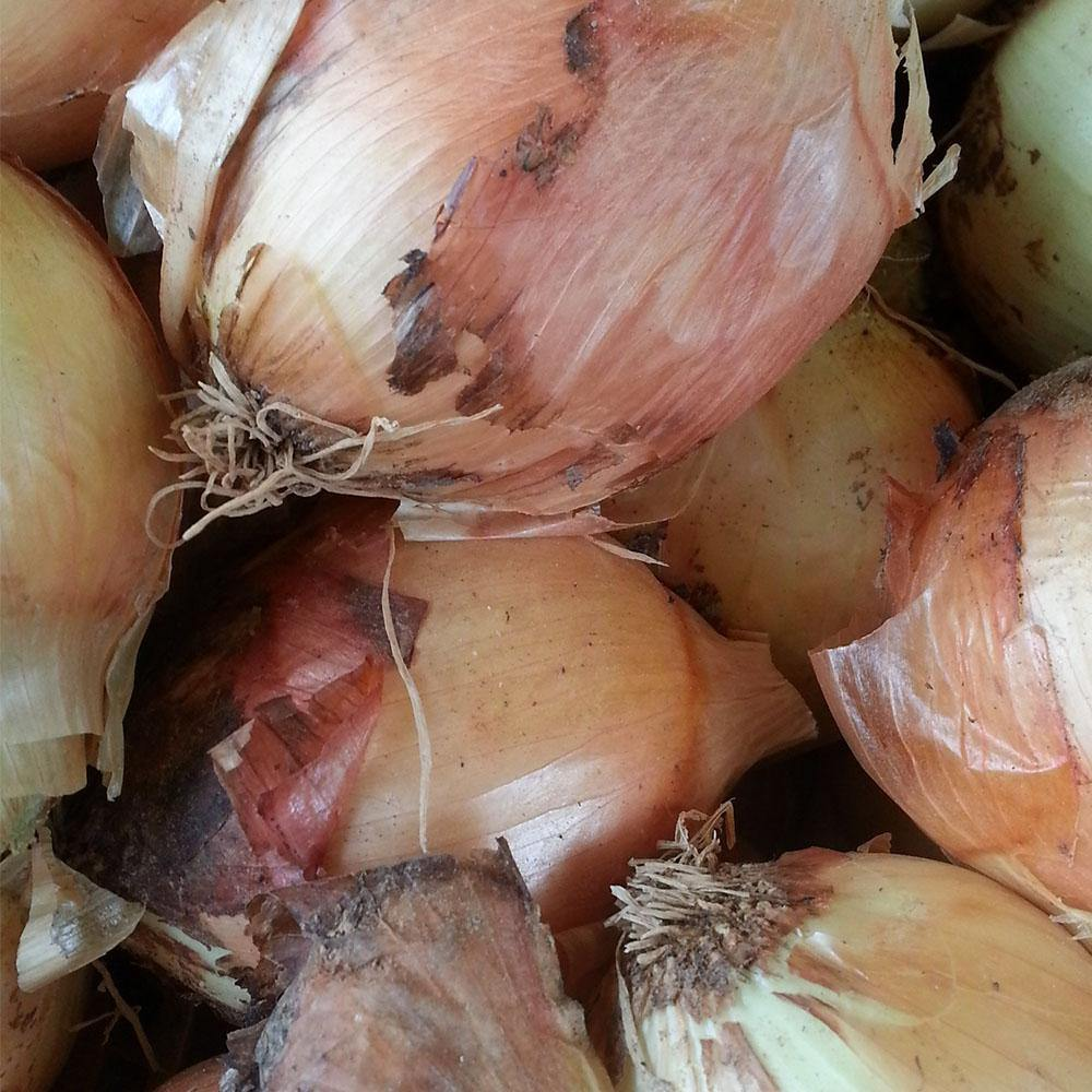 Onions - Vegetropolis Organic Fruit and Veg Delivery Service
