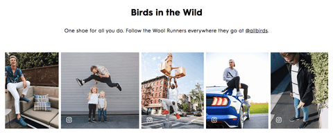 Allbirds user generated pictures DTC website