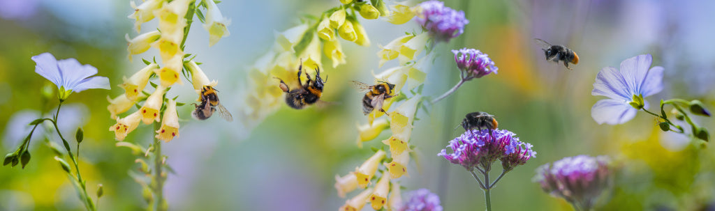 Saving The Bees, How You Can Help Our Buzzy Little Friends