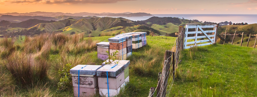 bee hives on hill