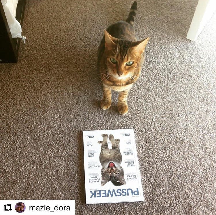 Pussweek Issue One