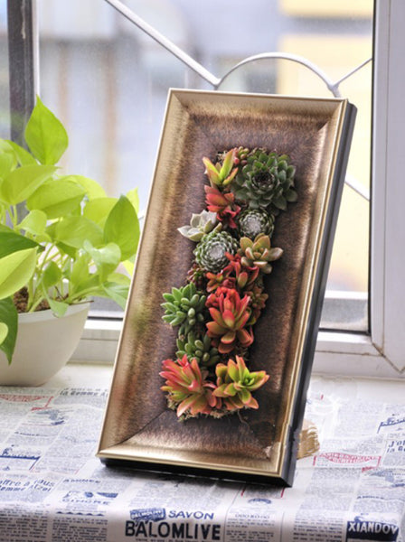 succulents planter gold