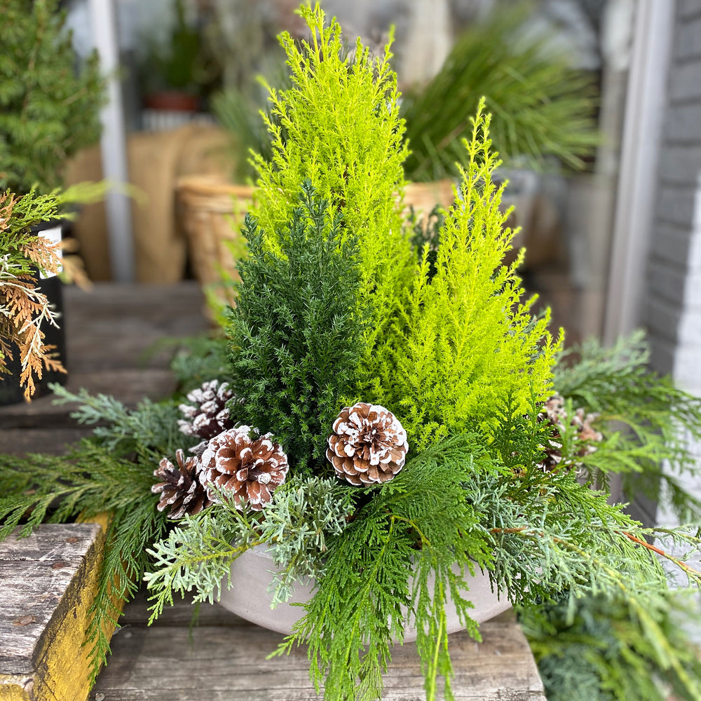 * Seasonal Option * - Evergreen Container Garden
