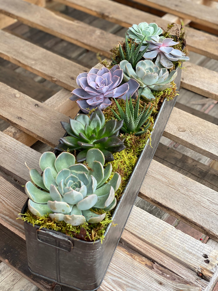 Long and Low Succulent Planter