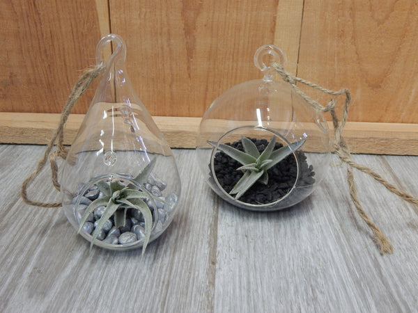 Hanging Air Plant Set