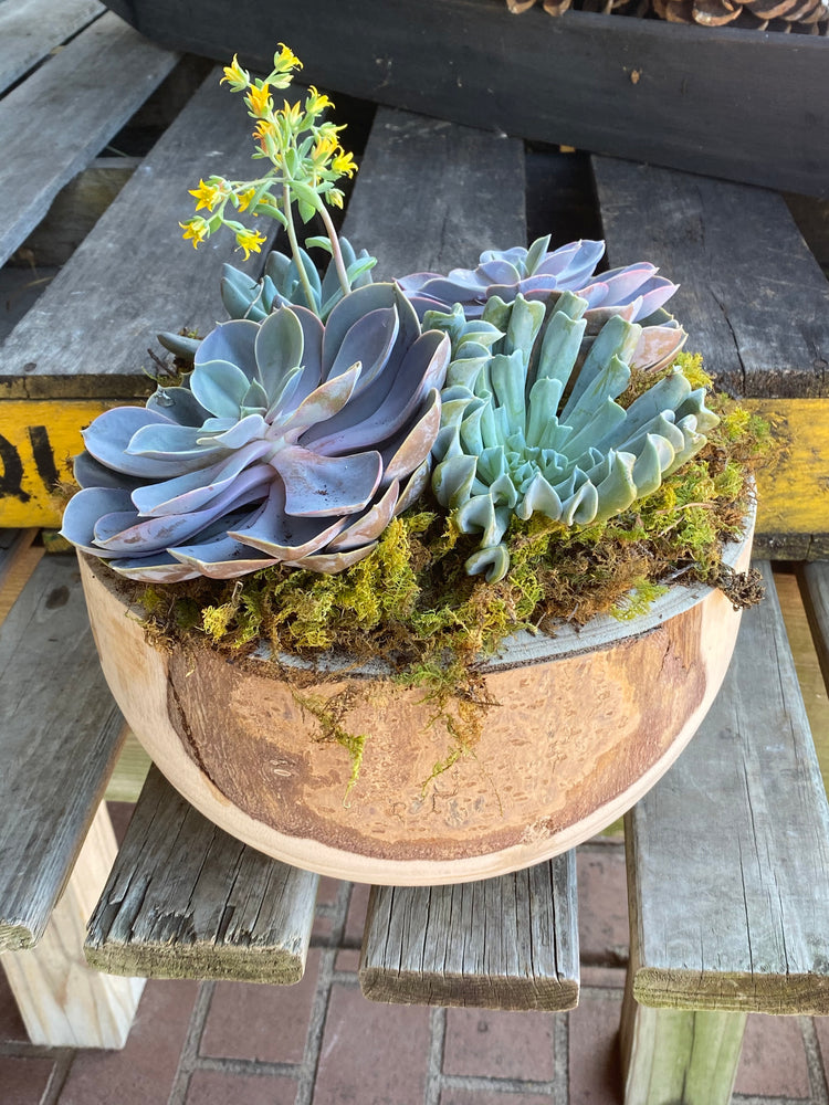 Limited Edition Succulent Planter