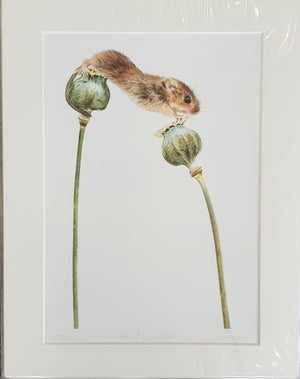 Limited Edition Print By Jessica Lennox S74JL69
