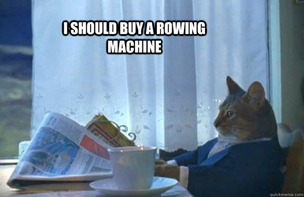 Even a cat should buy a rowing machine