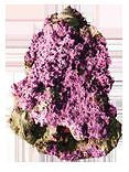 Kent Marine Purple Tech 500ml - Coral & Live Rock - Koidivision - 2