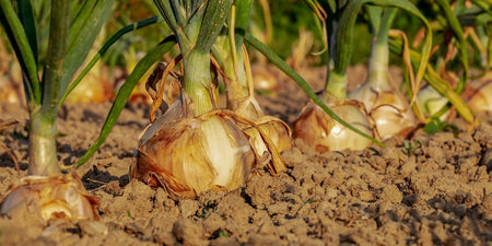 Supplement Quality Is An Onion: The Claims