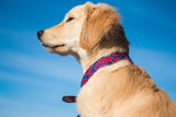 Caballo on Navy Dog Collar