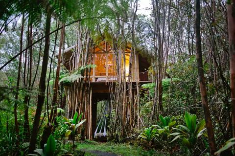 A Dreamy Tropical Treehouse