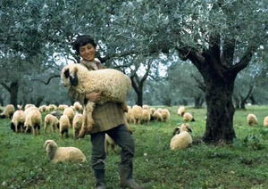 Good Shepherds come from Good Sheep