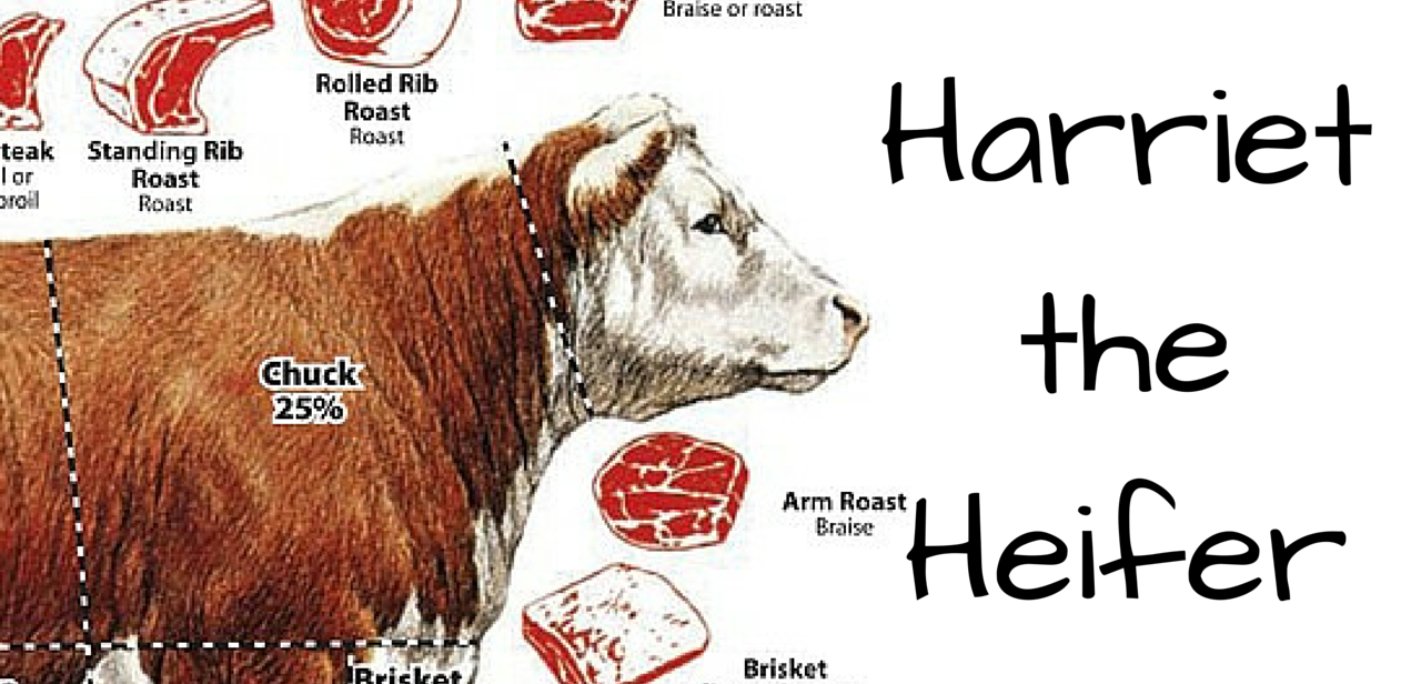 Lesson from Harriet the Heiffer:  Beef Cuts