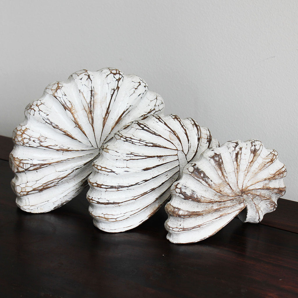 Shells, nautilus, wood, white washed